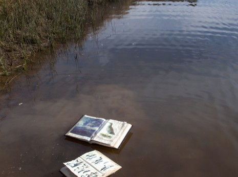 Altered books floating on a pond